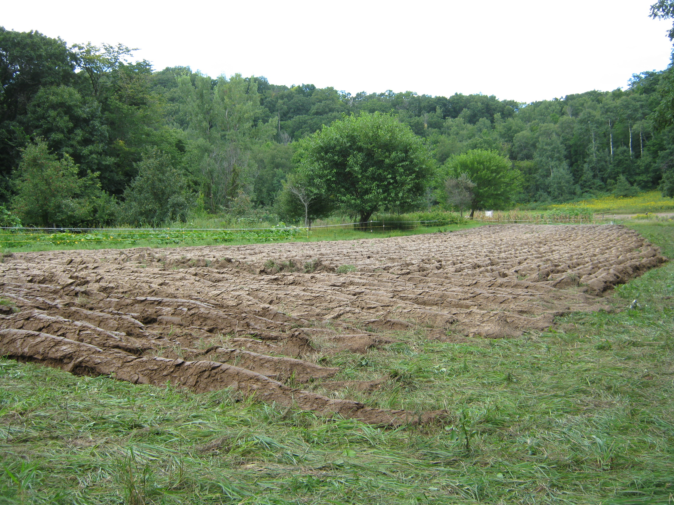 Avodah farm is located in the hills of Pepin County, WI